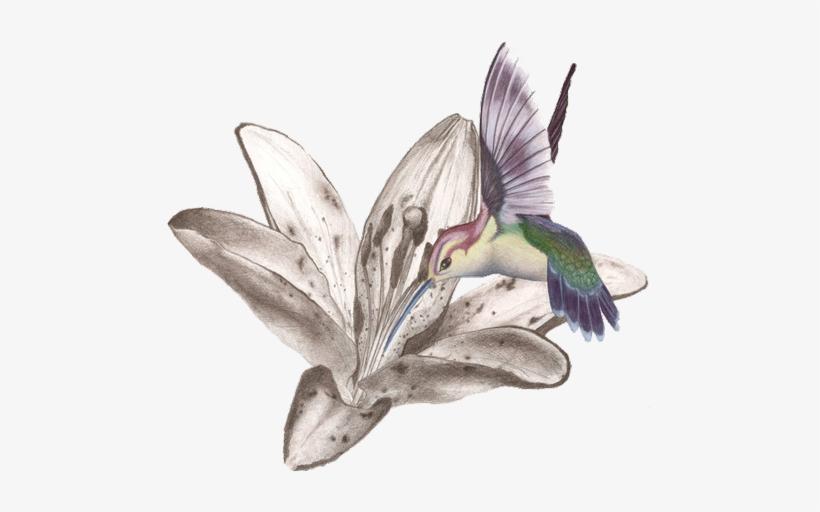 Hummingbird Tattoos Free Png Image Kolibri Tattoo Flash Free