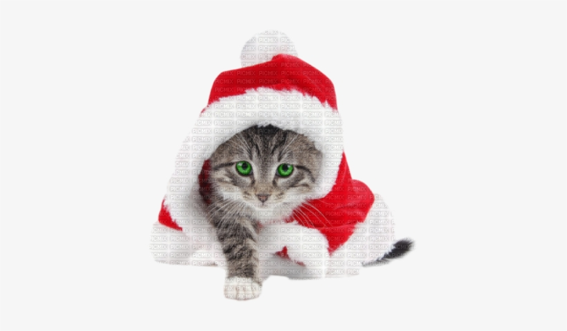 Christmas Cat - Striped Cat Dressed Like Santa For Christmas, transparent png #4004154