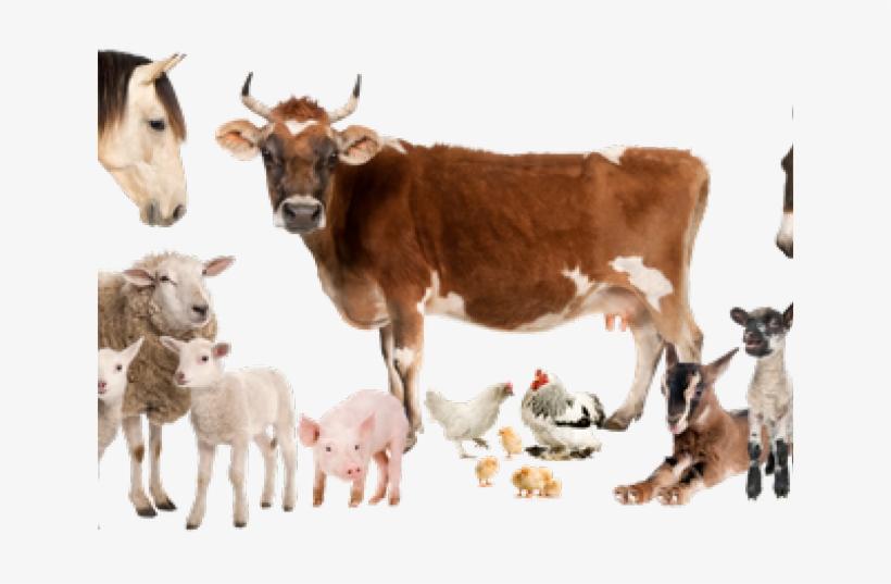 Pics Of Farm Animals - All Animals Pics Png, transparent png #4005620