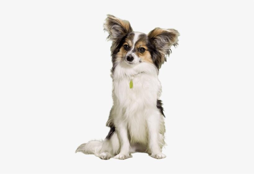 Small Dog Sitting Still - Dog, transparent png #4005817