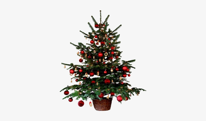 Arvore De Natal - Small Christmas Tree Png, transparent png #4016809