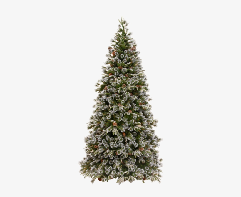 Xmas Pine Tree Png 21 By Iamszissz - Christmas Tree For Sale Philippines, transparent png #4025567