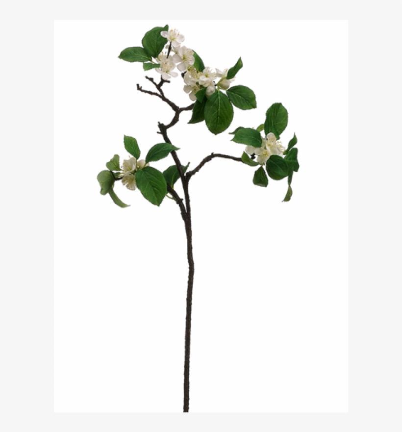 "26"" Apple Blossom Spray White - Silk Plants Direct Apple Blossom Spray - White - Pack, transparent png #4033538"