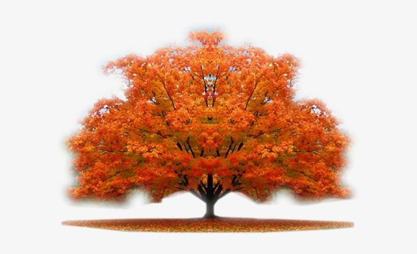 Autumn Trees - Nature Beauty Hd - Free Transparent PNG