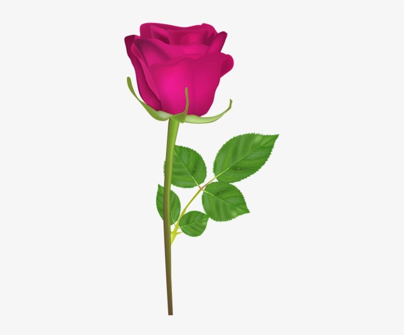 Birthday roses photos free download