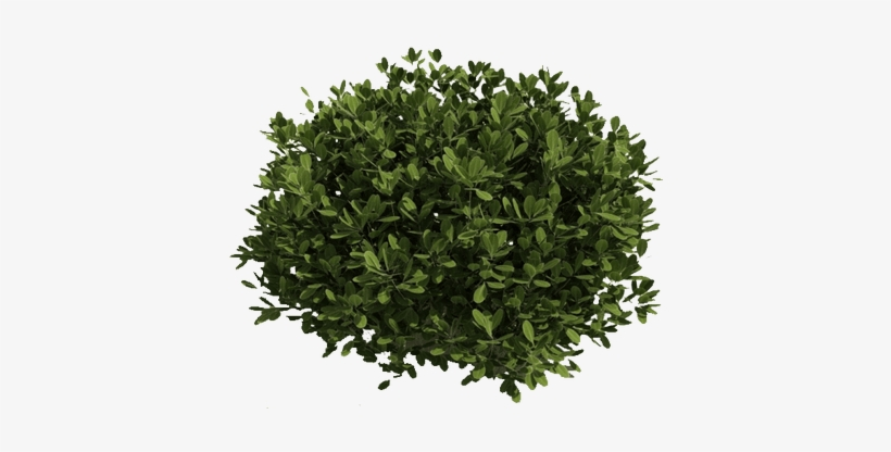Green Bush Png - Shrubs Clipart Transparent Background