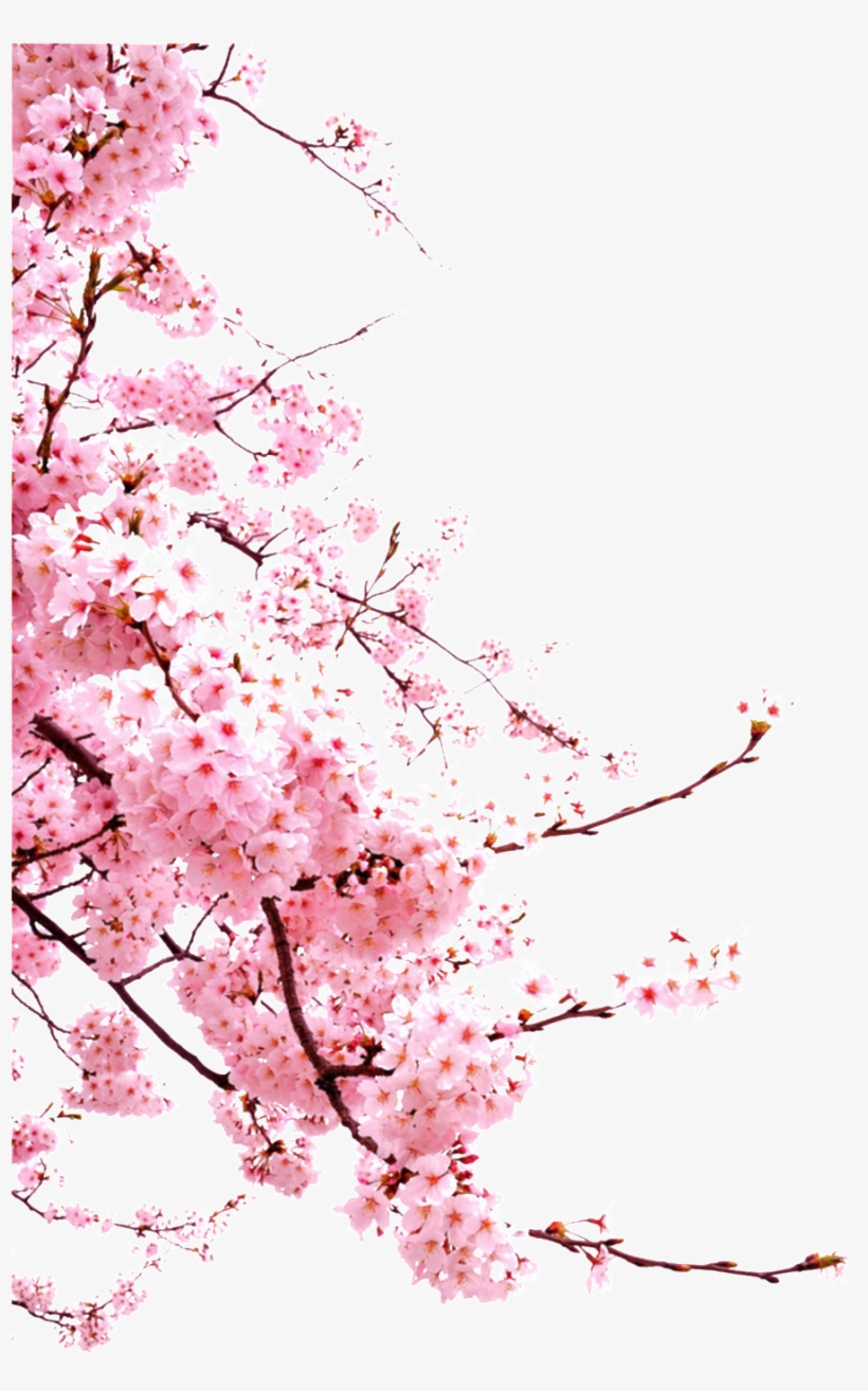 Romantic Chinese Style Painted Pink Flower Elements - Sakura Cherry Blossom Png, transparent png #4079419
