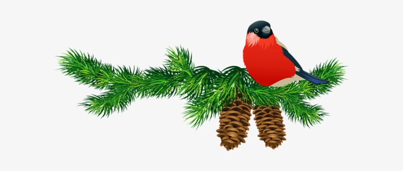 Go To Image - Pine Branches Clip Art, transparent png #4102712