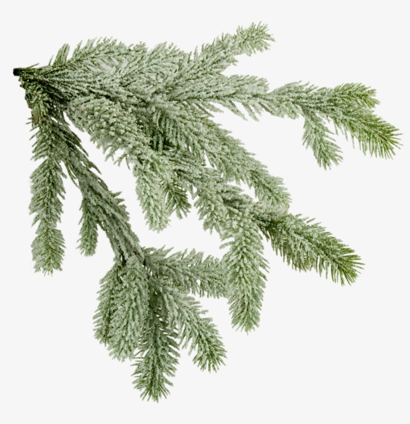 Pine Tree Branch Png Download - X Mas Tree Branch, transparent png #4102745