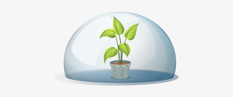 Humidity Dome - Flowering Plant And Non Flowering Plant, transparent png #4167797