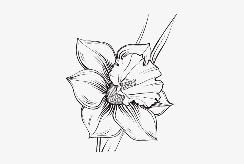 Flores Para Colorear Png