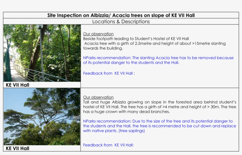 Albizzia Tree Acacia Tree At Ke Vii Hall - Acasia Tree Botanical Name, transparent png #4180201
