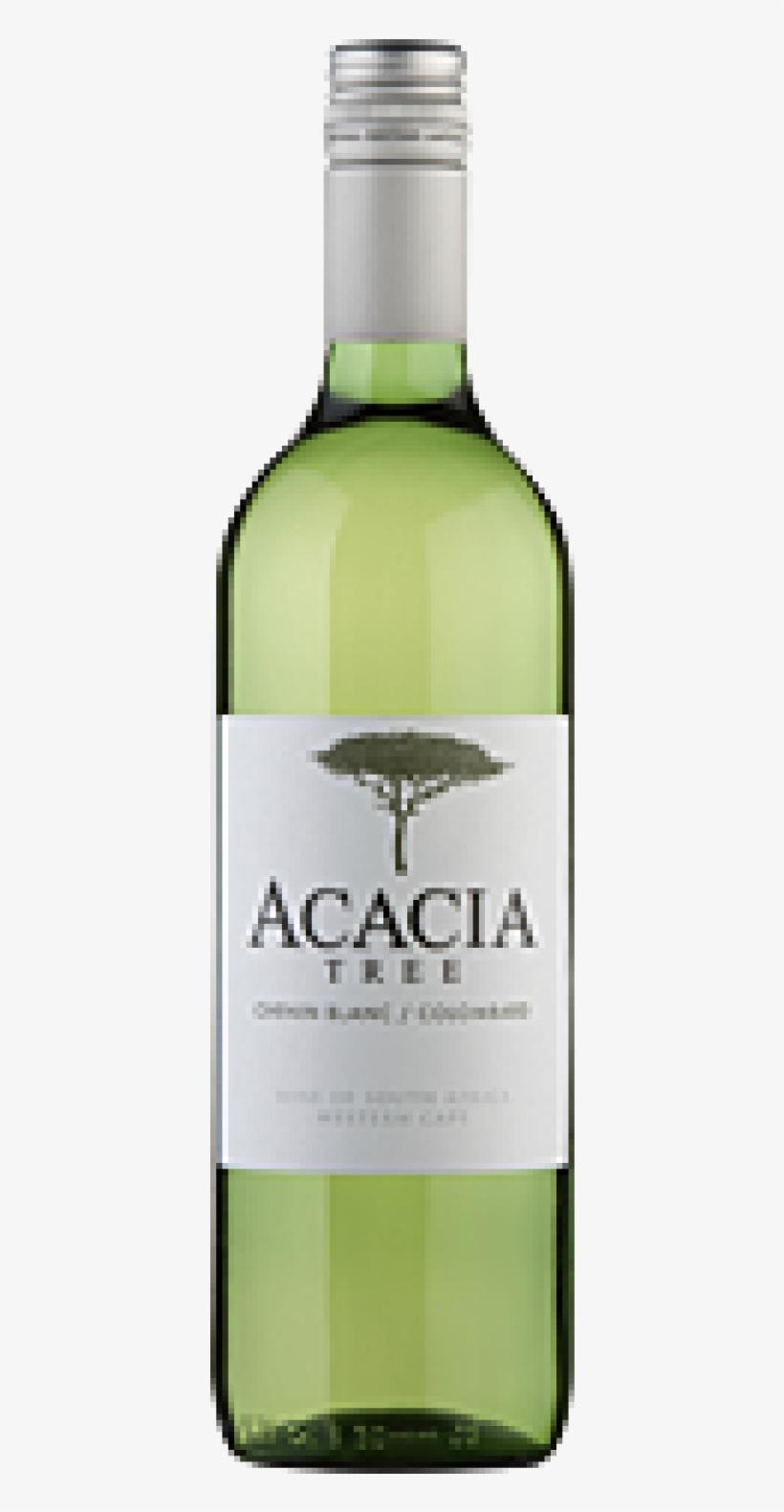 Acacia Tree Chenin Blanc - Tangled Tree Tropical Sauvignon Blanc, transparent png #4180221