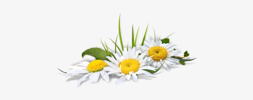 Flor Ramo De Flores Em Png Free Transparent Png Download Pngkey