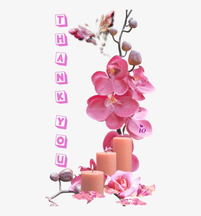 Orchid Flower Frame Psd, transparent png #4213948