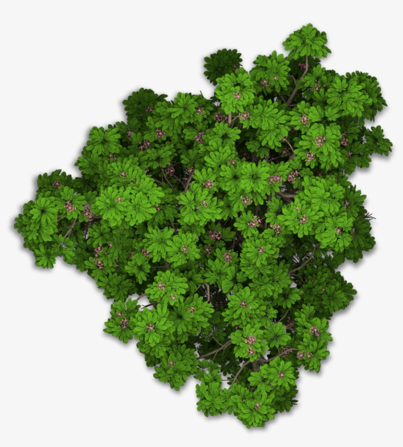 Www - Playcast - Ru - Bushes Png - Tree Png Top View, transparent png #4214934