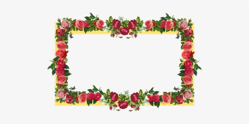 Red Flower Frame Border Frames - Border Design Flower Rose, transparent png #4250523