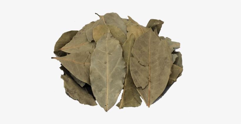 Louro Turco Em Folhas Bay Leaf Free Transparent Png Download