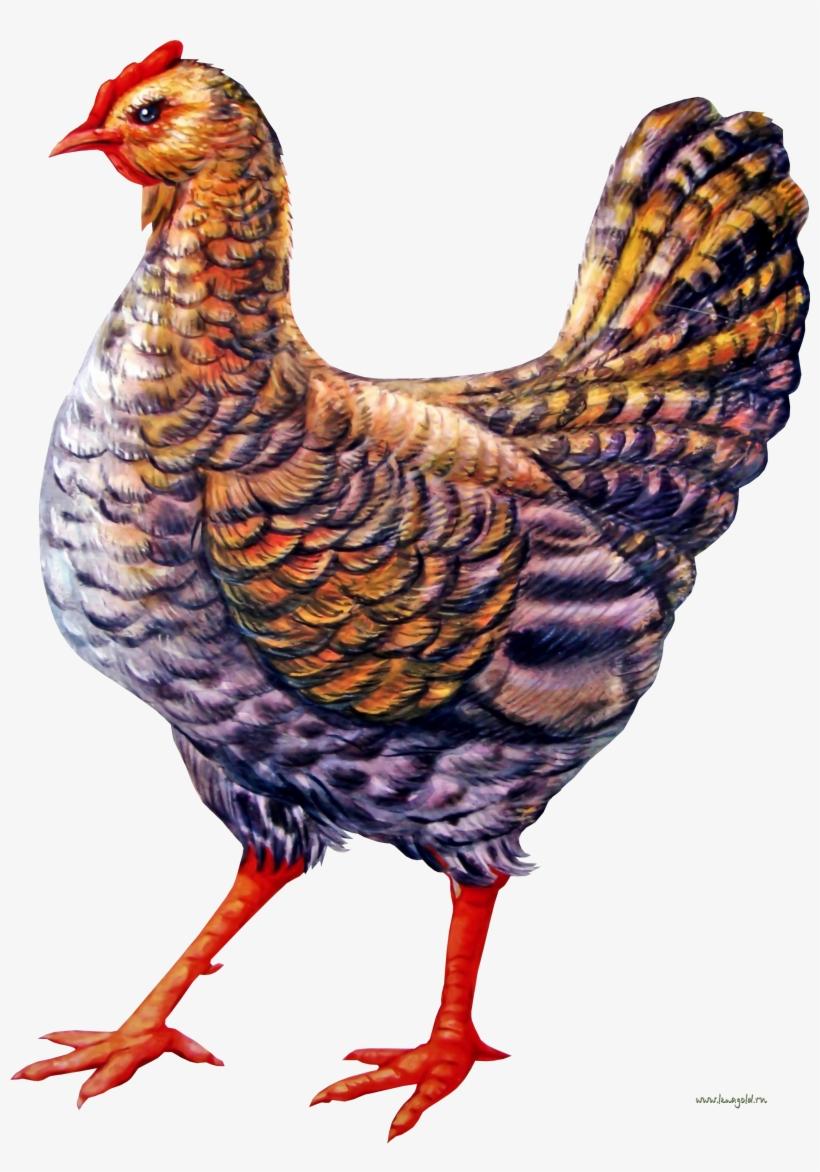 Картинка курицы для детей цветная