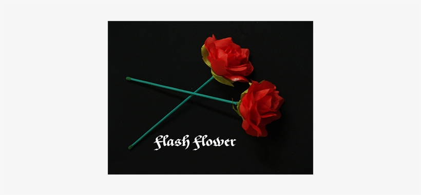 Red 2 Pack - Flash Flower (2 Pack) By Gd Wu, transparent png #4320037