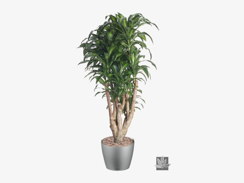 Office Plant Png - Interior Plants Tree Png, transparent png #4321849
