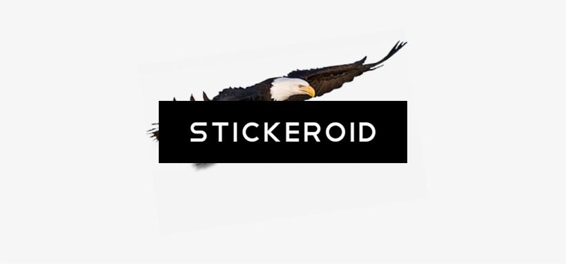 Flying Eagle Animals - Bald Eagle, transparent png #4336984
