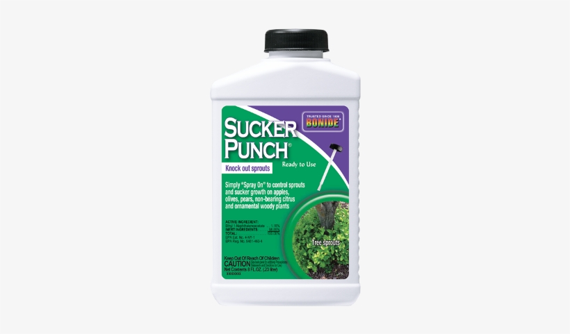 Bonide Sucker Punch Rtu, 8 Oz - Bonide Vine And Stump Killer With Applicator 8 Fl., transparent png #4374379