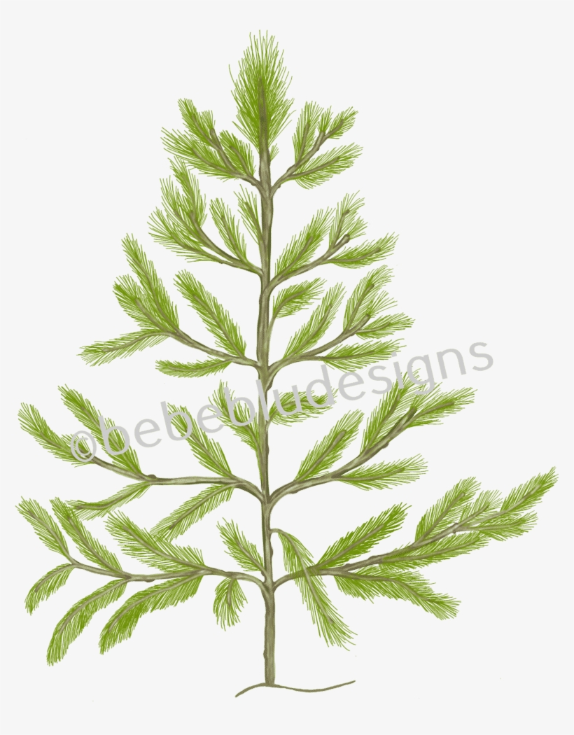 Pine Tree - Christmas Tree, transparent png #4382984