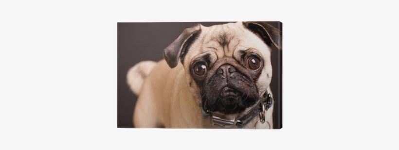 Personalised Pug Dog Pencil Case / Make Up Bag 172, transparent png #449938
