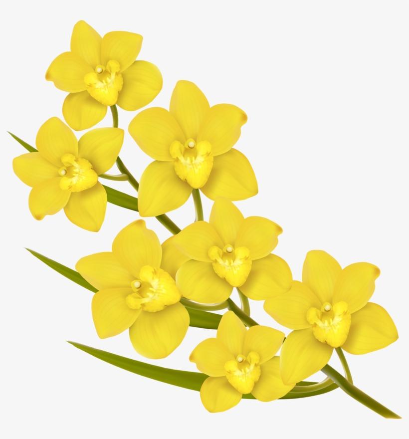 Фото, Автор Soloveika На Яндекс - Hd Png Images Of Yellow Flowers, transparent png #4404938