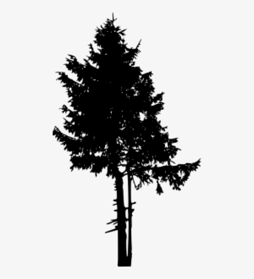 Pine Tree Png Free - Pine Tree Tree Silhouette, transparent png #451599