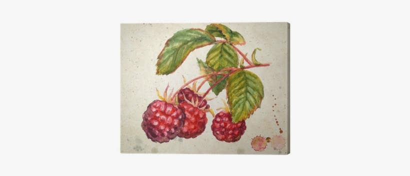A Branch Of Raspberry - Raspberry Watercolor, transparent png #455763