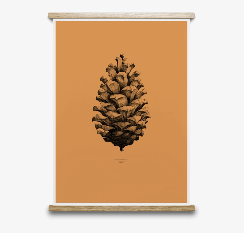 1 Pine Cone - Paper Collective Nature 1:1 Pine Cone Poster, White, transparent png #459031