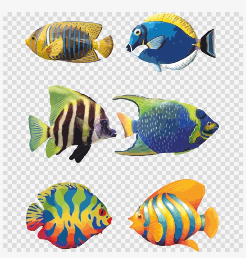 Download Tropical Fish Drawings Clipart Angelfish Koi Fish Drawing