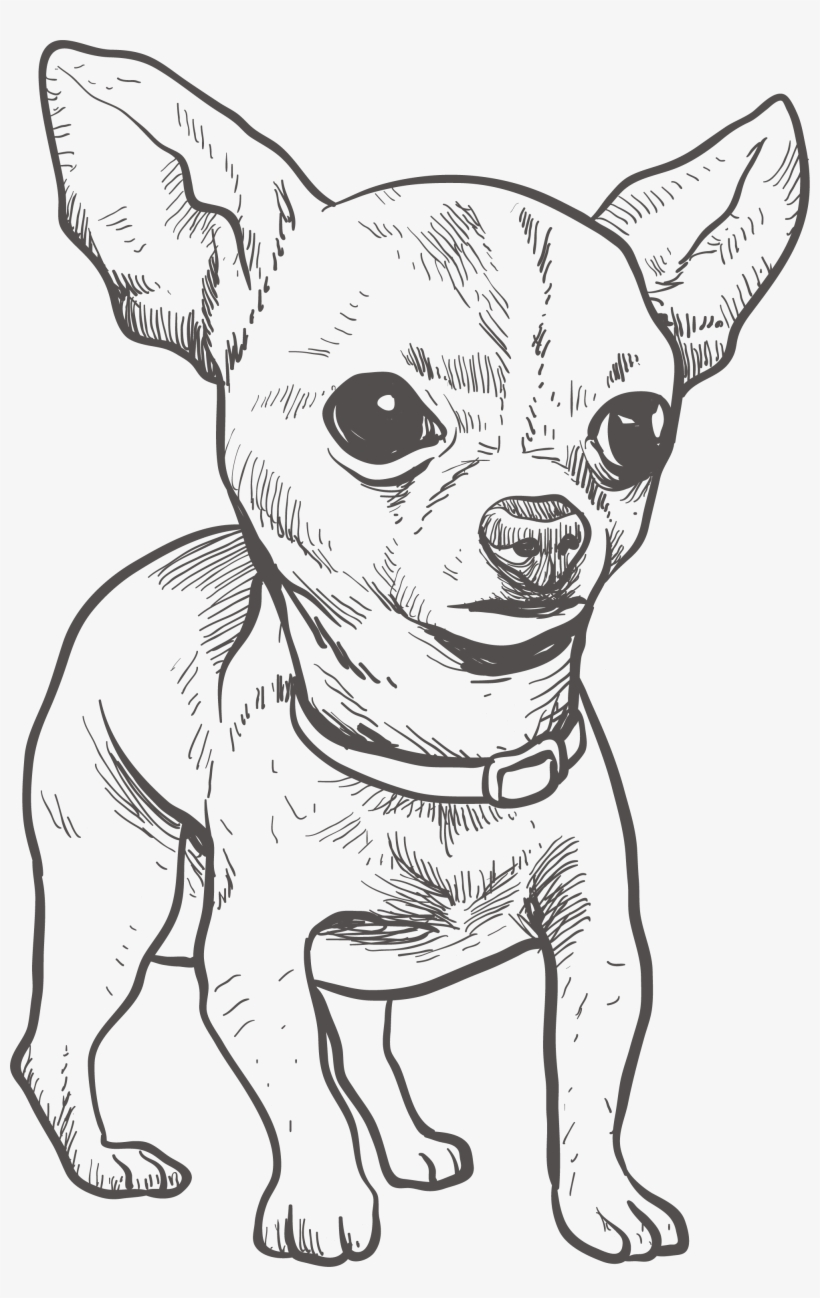 Chihuahua Puppy Drawing Illustration Chihuahua Drawing Free Transparent Png Download Pngkey