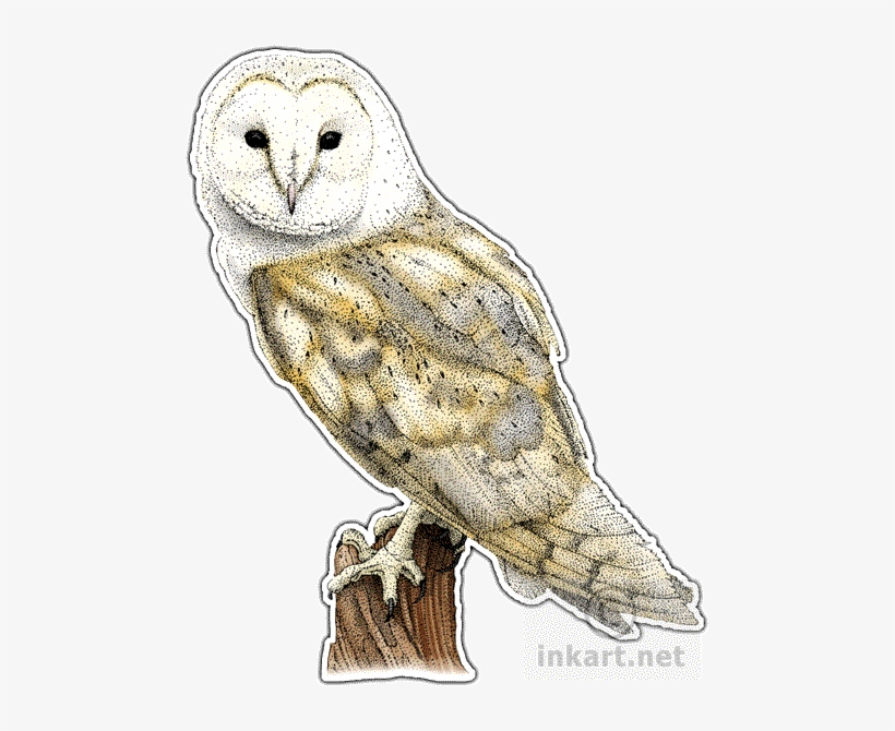 Barn Owl Png File - Barn Owl Throw Blanket, transparent png #465125
