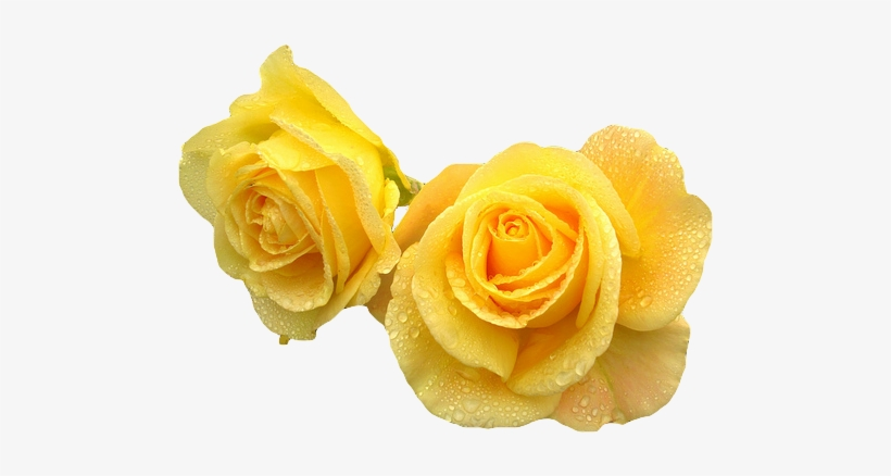Yellow Transparent Flower Crown Download Yellow Roses Transparent