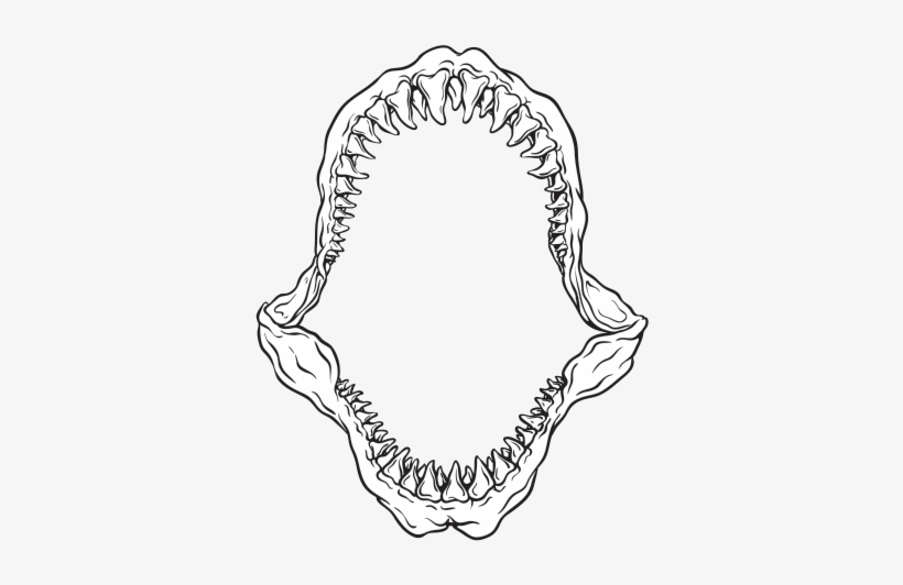 Drawing Shark Jaws - Great White Shark Jaw Drawing - Free