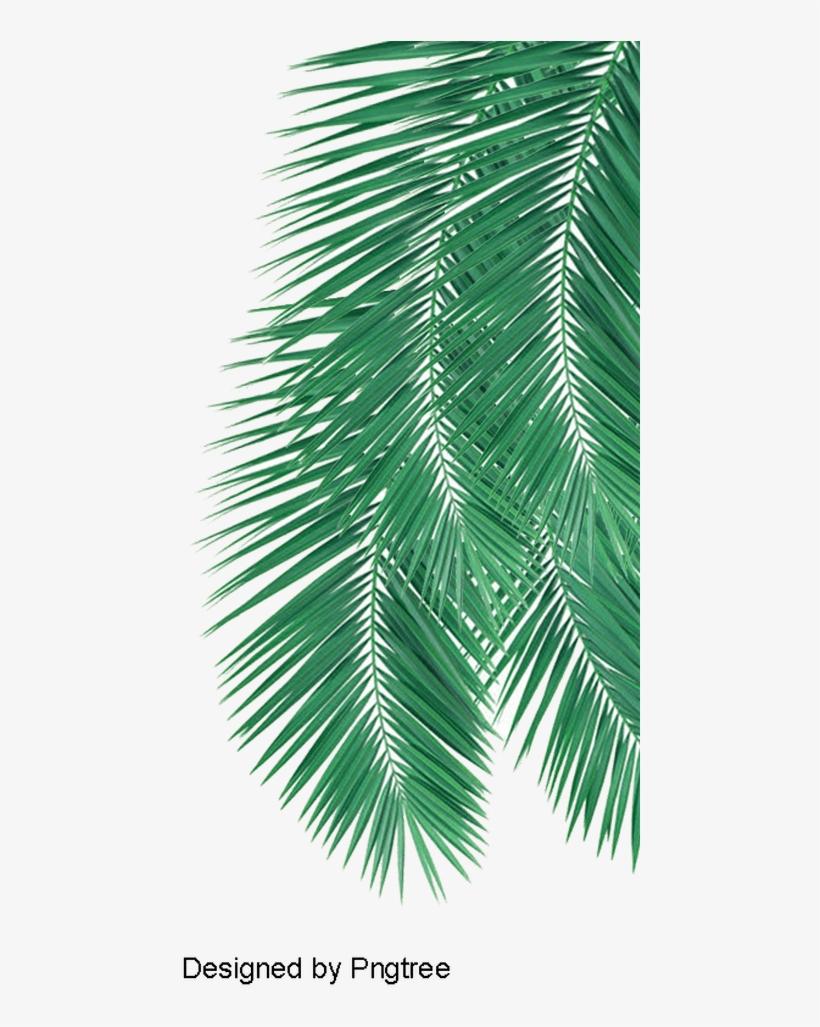 Palm Leaves Png Coconut Tree Leaf Png Leafjdi Co - Leaf Png, transparent png #4612219