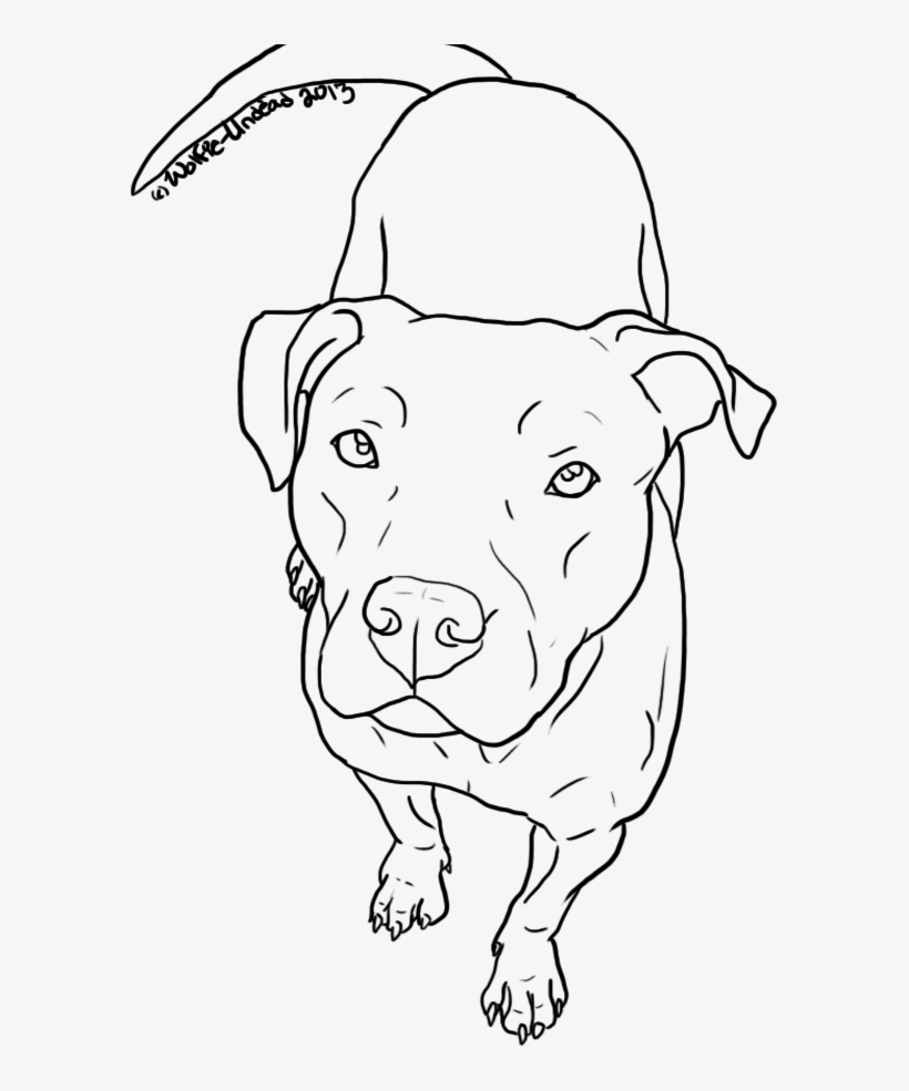 Pitbull Dog Head Png Easy To Draw Pitbull Free Transparent Png