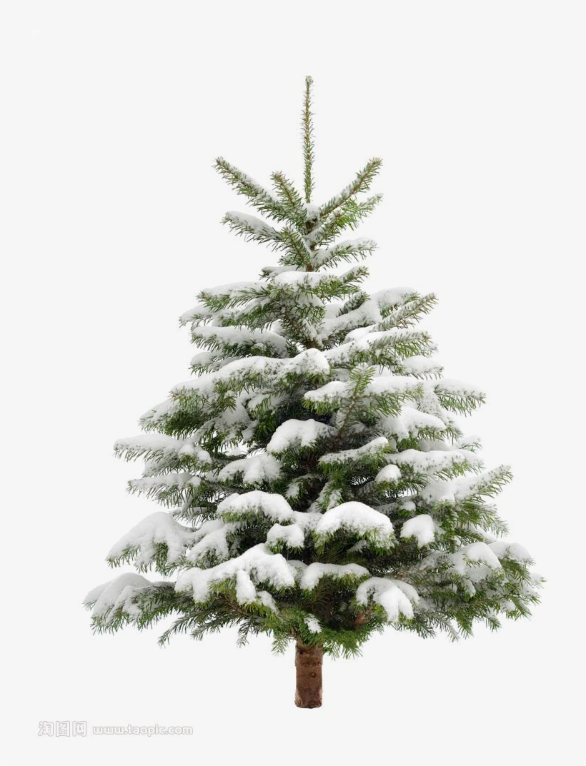 Pine Tree Snow Christmas Fir Trees Transprent Clip - Pine Tree Png, transparent png #4732808