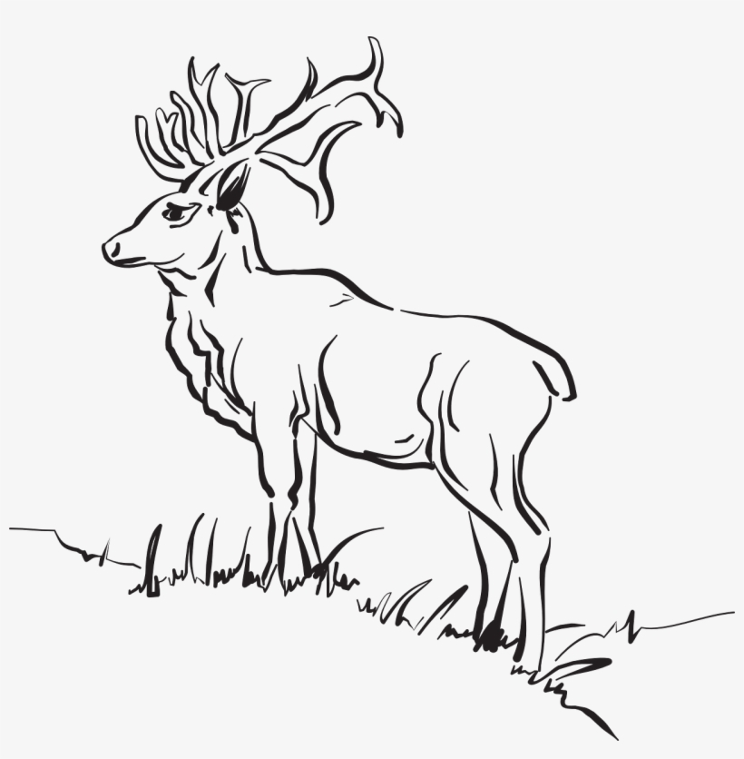 Deer Grass Forest Standing Animal Free Photo - Animals Outline Deer Outline Sketch Clipart, transparent png #4747697