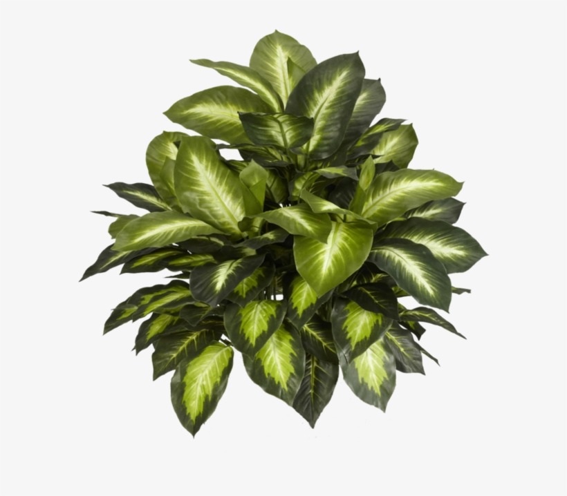 Indoor Plants Top View Png - Free Transparent PNG Download ...