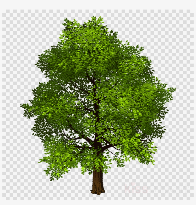 Download Transparent Background Photo Shop Trees Png Tree Clipart
