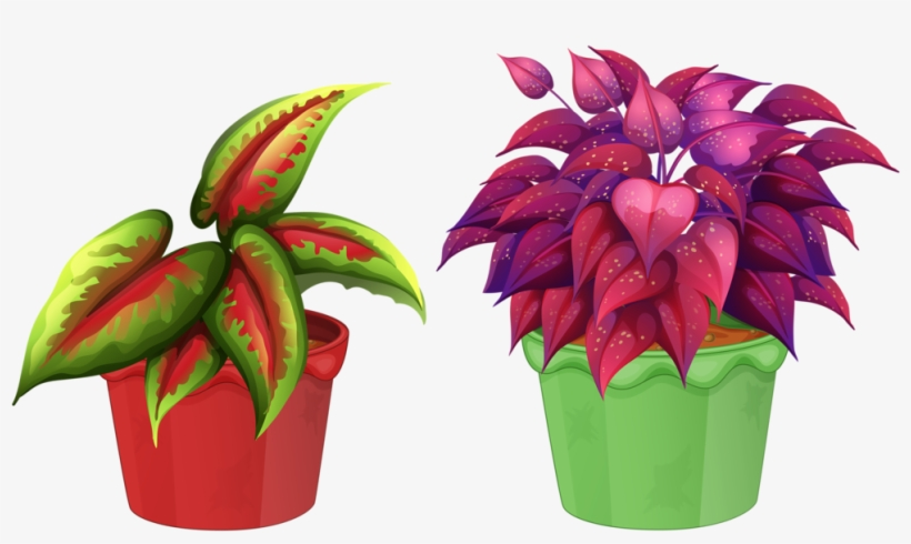 8 Garden Clipart, Flower Pots, Flowers, Views Album, - Flowering Plant And Non Flowering Plant, transparent png #4796136