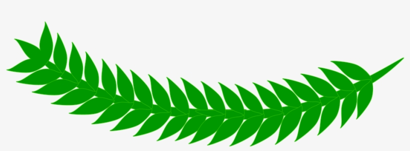 fern clipart daun net free transparent png download pngkey fern clipart daun net free
