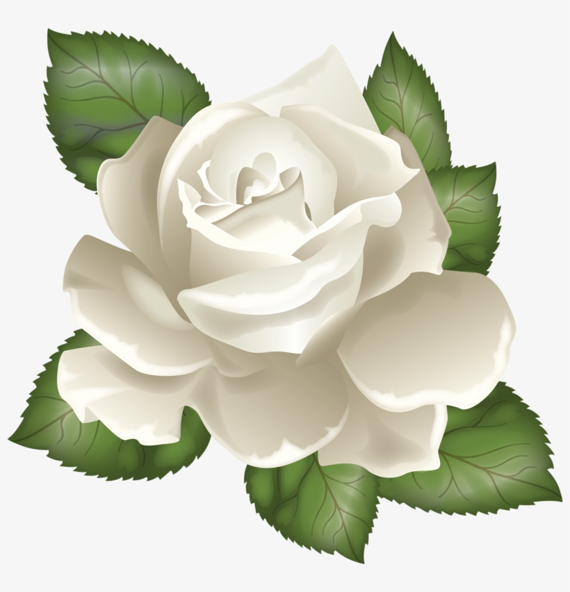 Photo From Album Rozy On Yandex White Rose Vector Png Free