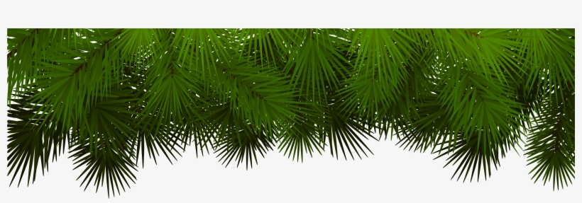 Christmas Tree Branch Png Download - Christmas Branch Transparent Clipart, transparent png #489942