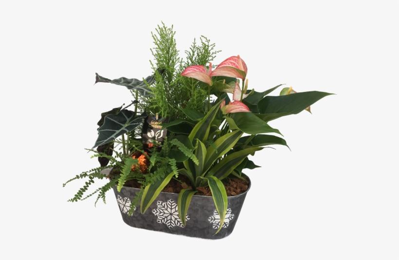 Snow Flake Christmas Printer - Flowerpot, transparent png #4801239