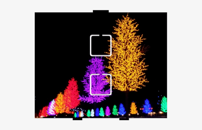 Light Trees - 2 On/off - Christmas Lights, transparent png #4838113